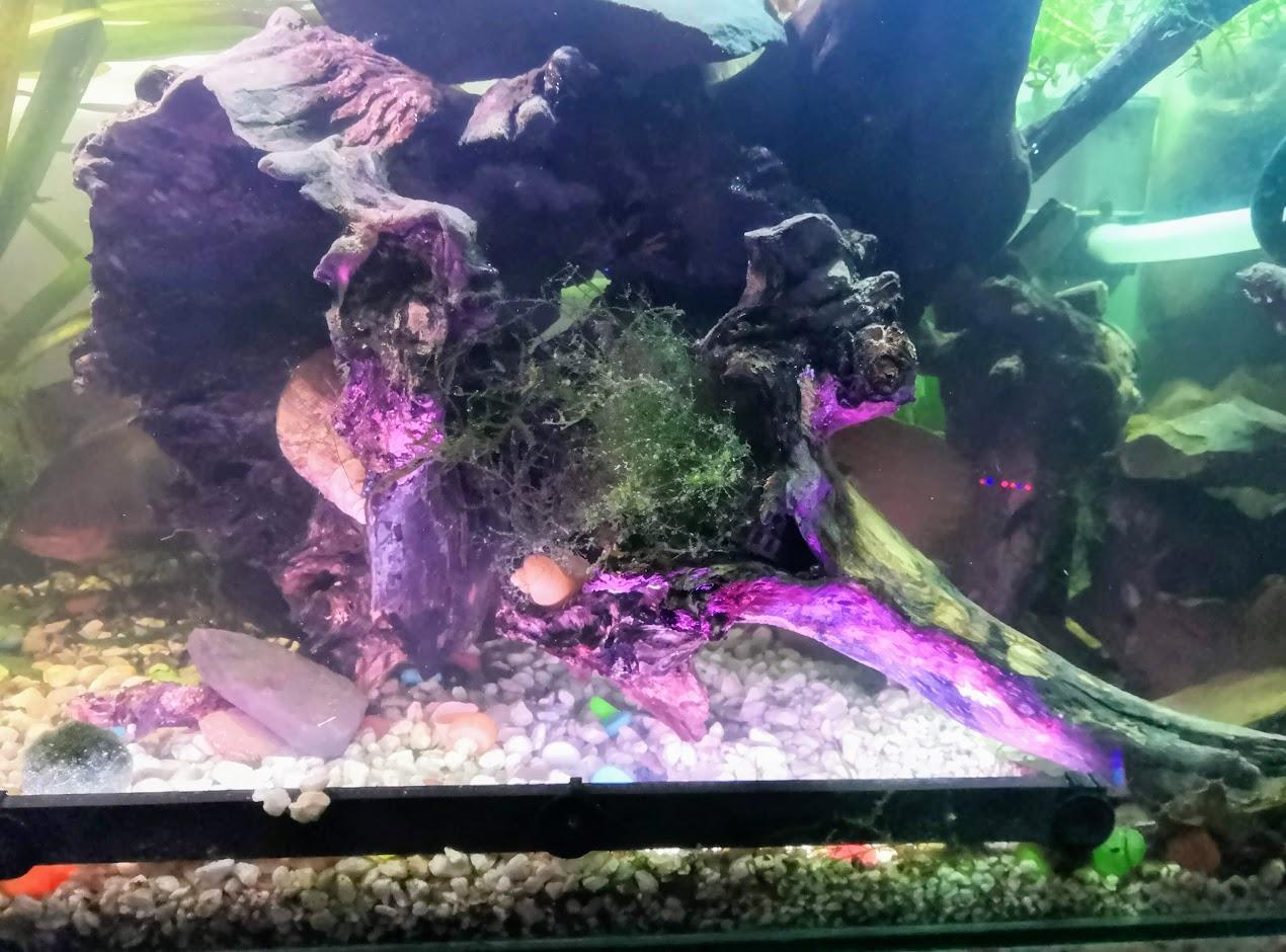 Koøen v akváriu